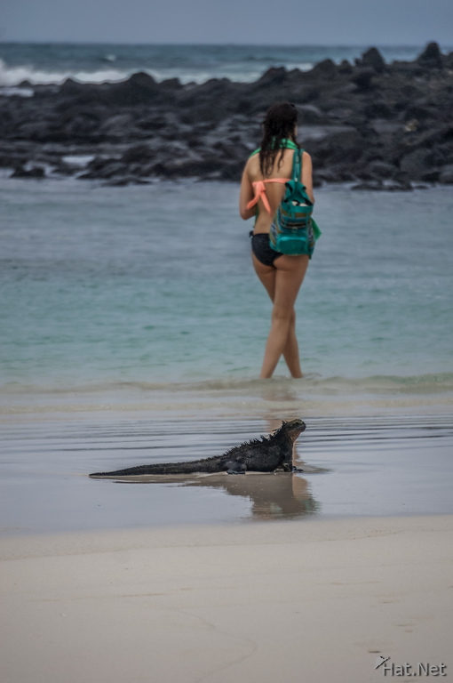 Marine Iguana and Beach Girl near Tortuga Bay