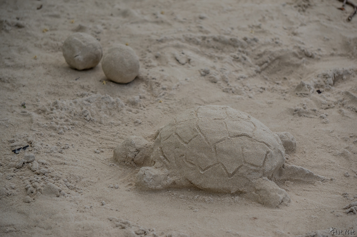 Turtle sand sculpture tortuga bay