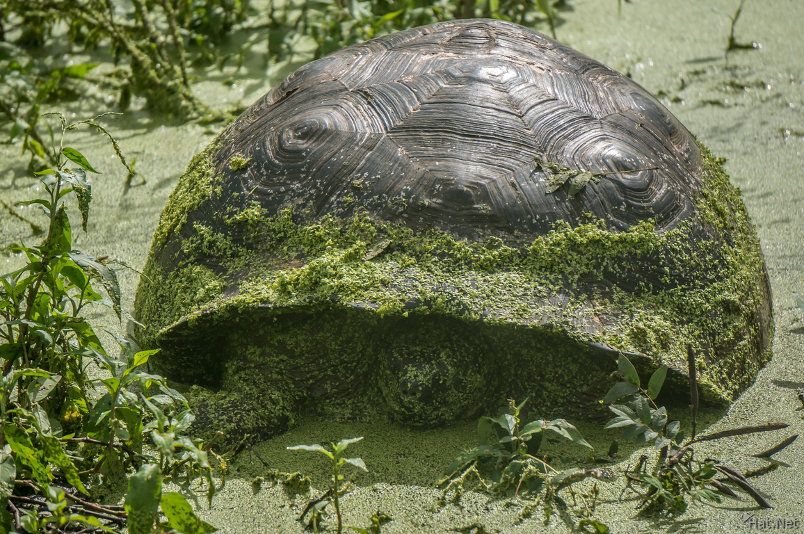 Giant Tortoise bredding center near Santa Cruz Highland