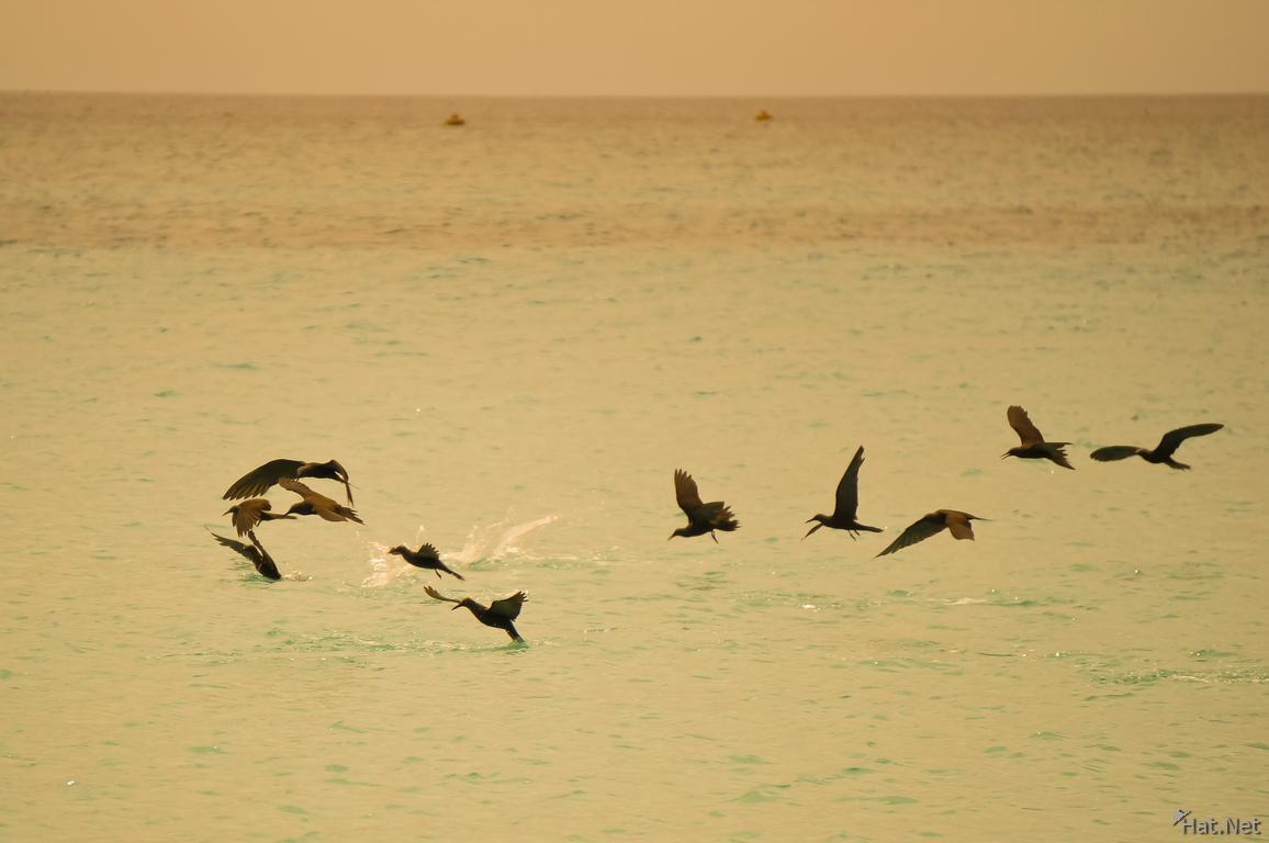 Sea birds near North Seymour