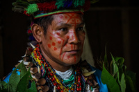 Mr Shaman Amazon,  Cuyabeno Reserve,  Sucumbios,  Ecuador, South America