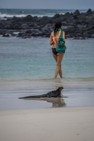 Marine Iguana and Beach Girl near Tortuga Bay Puerto Ayora, Galapagos, Ecuador, South America