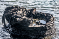 20140514150610-Marine_Iguanas_on_James_Bay