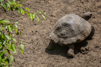 20140517130314-Land_Tortoise_Breeding_Center_on_Isla_Isabella