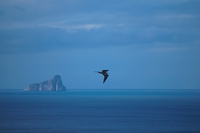 20140519162114-Frigate_Bird_near_kicker_rock_-_leon_dormido