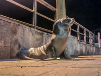 20140521203759-Lonely_sea_lion_baby_in_Puerto_Baquerizo_Moreno