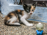 Kitty and Hello Kitty in Las Penas Guayaquil, Ecuador, South America
