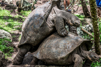 20_galapagos_wildlife