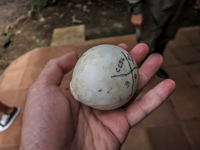 turtle egg Baquerizo Moreno, El Progreso, El Junco, Puerto China, Galapagos, Ecuador, South America