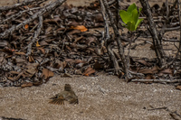20140514084331-finch_lying_on_sand